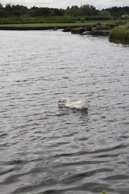 鬼怒グリーンパーク 水中アスレチック 栃木お出かけ 自然